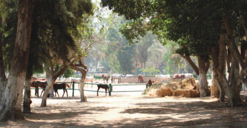 Cairo is well worth a stud study tour …