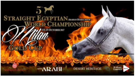 During the 14th and 15th of October the spotlight was on the Straight Egyptian Show Horses