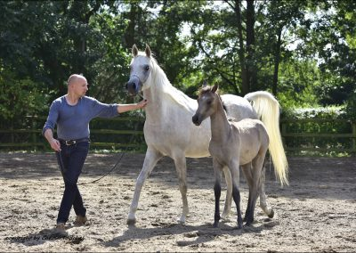 Stud Farm tour Germany 2016