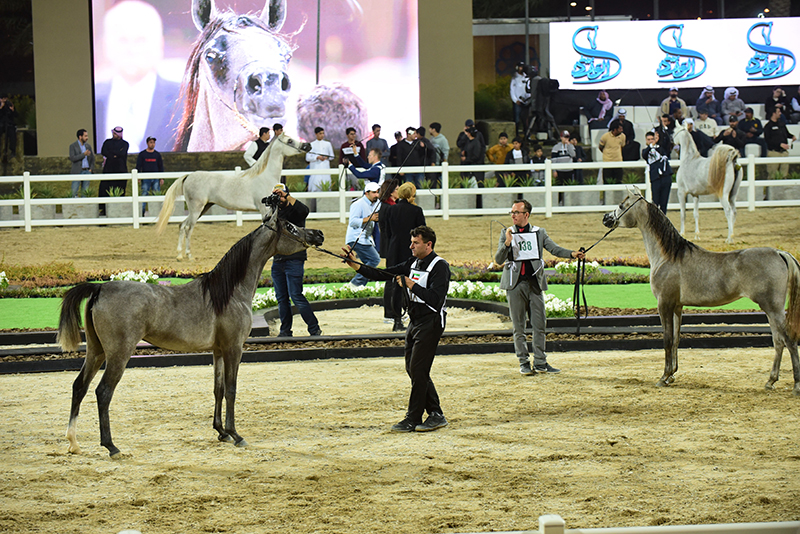 Kuwait Breeders Cup – Straight Egyptian