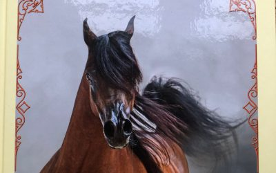 Stallions of the World Volume XVII
